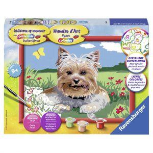 Schilderen op nummer Yorkshire Terrier